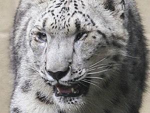 Binghamton Zoo Facebook