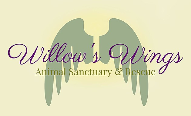 Willow's Wings